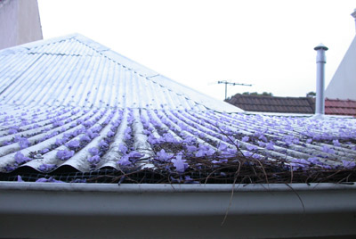 Jesse's photo of Jacaranda on the roof